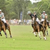 Polo by the Sea Palm Beach